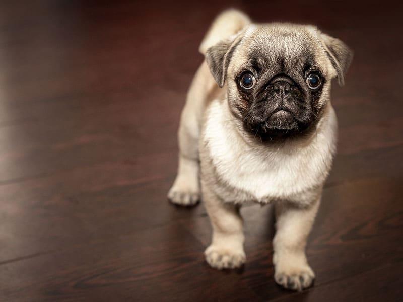 Residencias caninas, Datos a tener en cuenta