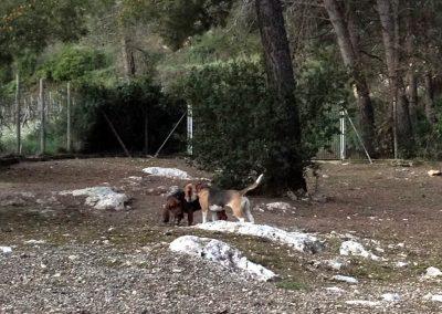 espacio-de-recreo-para-perros