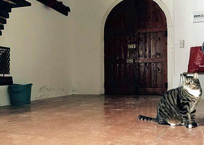 gato-en-la-residencia-2