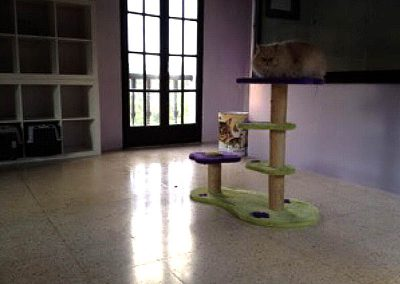 Alojamiento felino