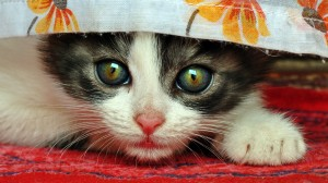 peluqueria gato