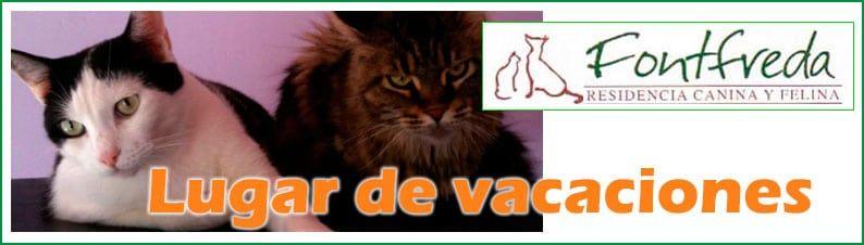 Residencia Felina Fontfreda. Lugar de vacaciones para su gato.
