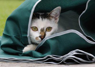 gato-comprender