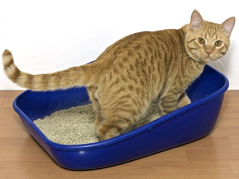 El cajón para gato