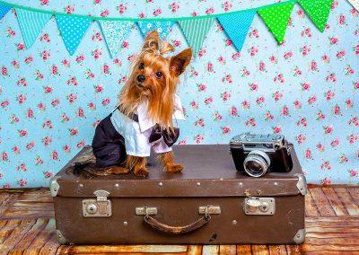 mascota-viaje