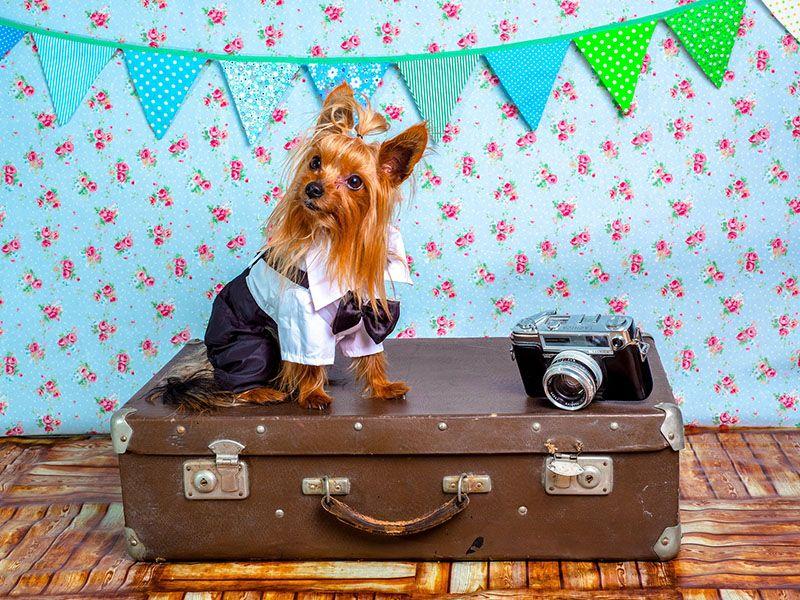 Viajar con mascotas en low cost