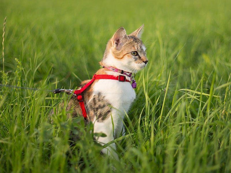Sacar a pasear al gato