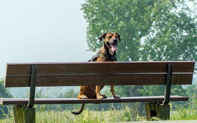 Cómo separarte de tu perro por primera vez