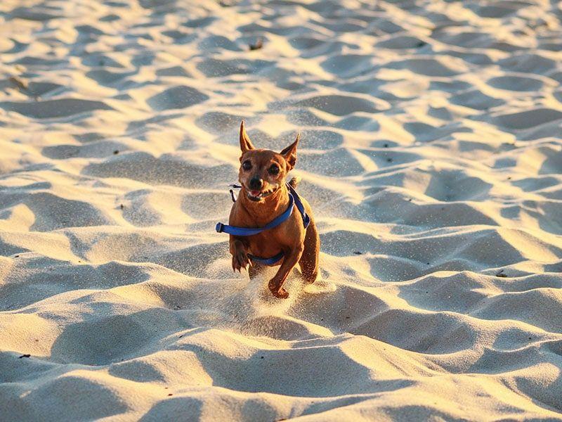 ¿Puedo ir a la playa con mi perro?