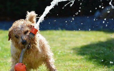 Cuida tu perro en verano