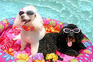 Cuidados para nuestro perro en verano