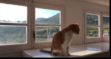 Espacio para los felinos