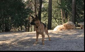 Área de recreo canina