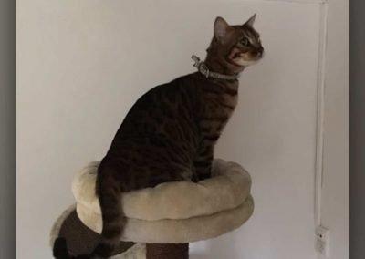 felino-observando