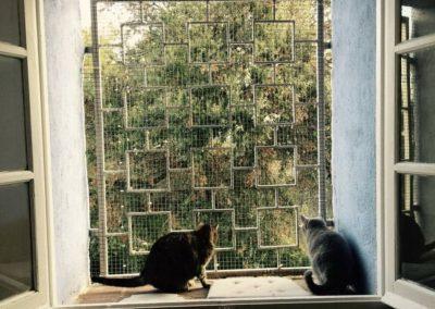 felinos-en-la-residencia