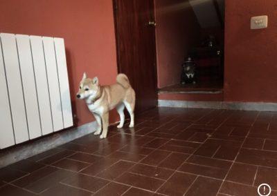guarderia-canina-10