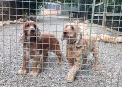 guarderia-canina-8