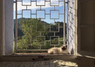 residencia-felina-13