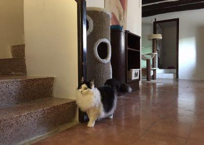 residencia-felina-4
