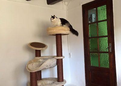 residencia-felina-6