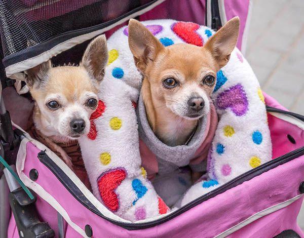 Recogida y entrega de perros y gatos a Domiclio