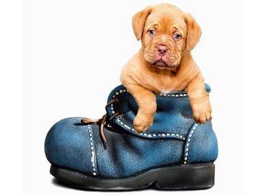 cachorro-perro-02