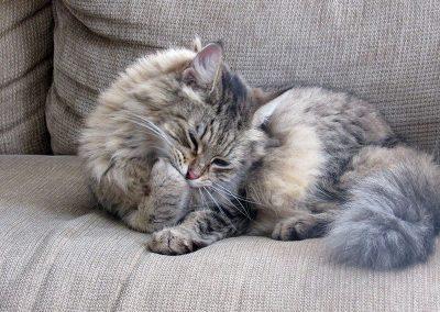 gato-bola-pelo