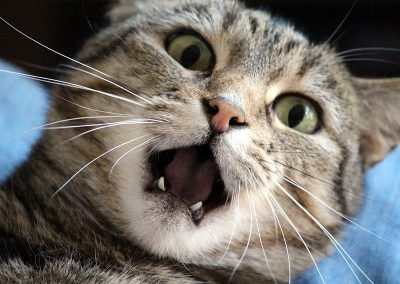 gato-stress