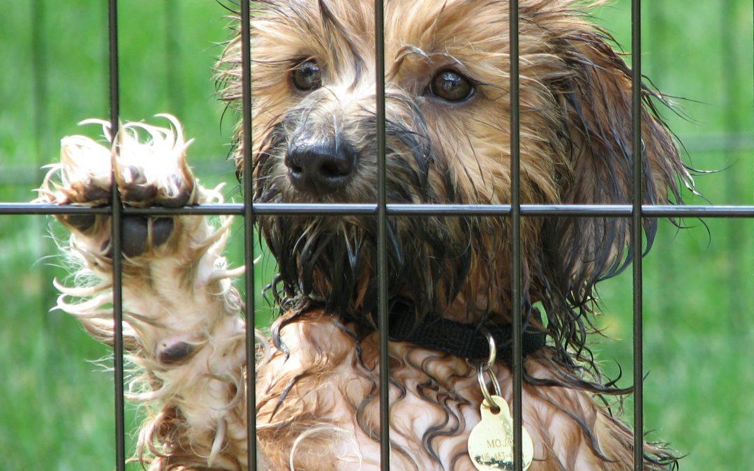 Las vacaciones de tu mascota: residencia canina