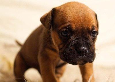 cuidados epeciales a cachorros