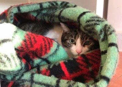 gato-camufloa