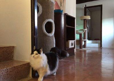 gato-en-residencia-felina