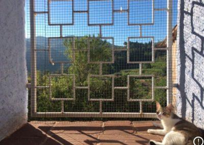 gato-toma-sol-ventana
