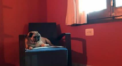 alojamiento-canino-en-casa