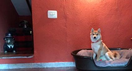 guarderia-canina-en-casa-2