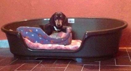 perro-alojado-en-casa