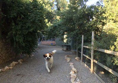 Área de recreo del hotel canino