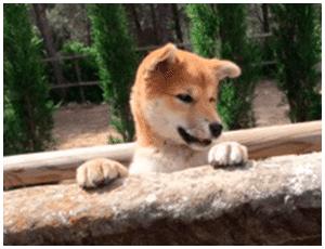 Servicio de hotel canino