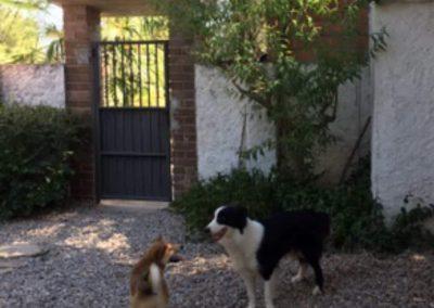Perros en un espacio de recreo de la residencia