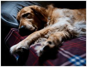 Servicio de Residencia Canina