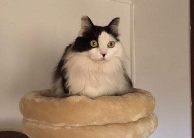 Residencia felina