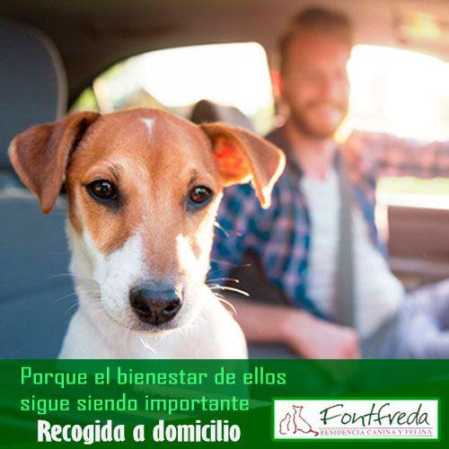 Residencia canina fontfreda realiza la recogida de perros a domicilio en Barcelona
